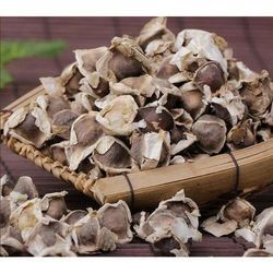 Dried Brown Moringa Seeds, For Pharmaceutical,Food Industry, Packaging Size: 10-50 Kg
