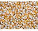 Food Grade Maize