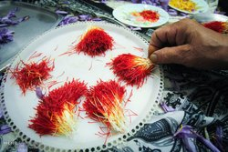 Prem Pushali Saffron Iran Pushal Saffron