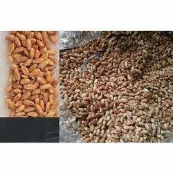Maroon Overseas Organic Hard White Wheat Grain, Packaging Type: Pp Bag, Packaging Size: 50 Kg