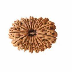 Brown 17 Mukhi Savar Rudraksha, Packaging Type: Packet