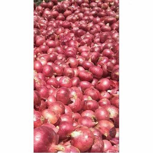 A Grade Dry Place Fresh Red Onion, Onion Size Available: Medium, Packaging Size: 50 Kg