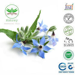 Borage Carrier Oil