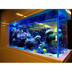 Glass Aquariums in Chennai - Latest Price & Mandi Rates from