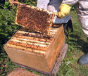 Beekeeping Project - Beehive Box