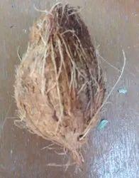 Large Coconut