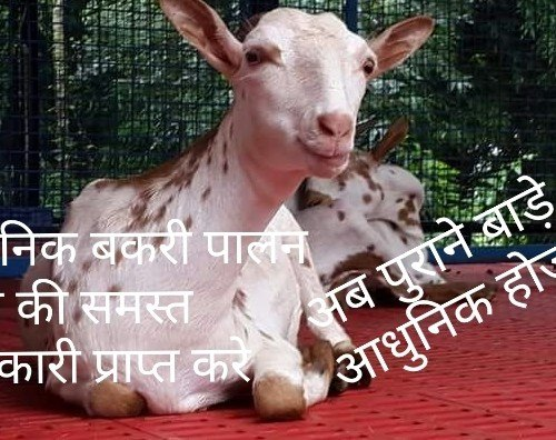 Goat Training Center, For Farming, Sri Aishwarya Enterprises