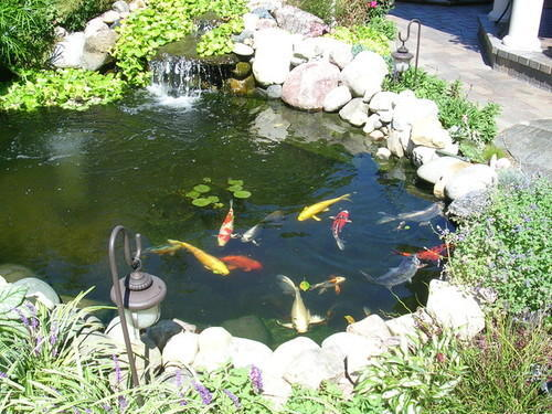 koi fish pond with waterfall at rs 300000 piece dadar mumbai