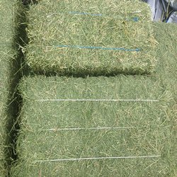 Dry Grass Alfalfa Hay, Packaging Type: Loose, 500