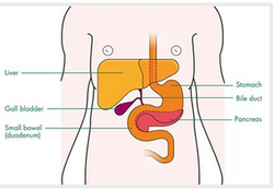 Bile Duct Cancer Treatment