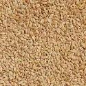 HI 8759 Pusa Tejas Wheat Seed
