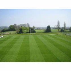 Sports Ground Natural Grass