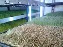 Hydroponic Wheatgrass Machine