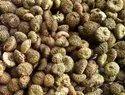 Akarkara种子