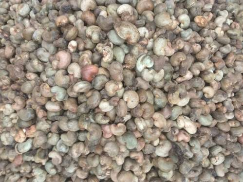 Raw Cashew Nuts, Pack Size: 80kg Jute Bags, Packaging Type: Sacks