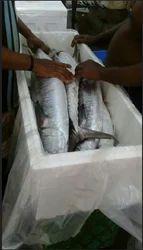 Fresh Chilled Fish 04
