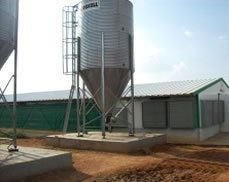 Poultry Production And Business Management