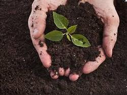Vermicompost Product
