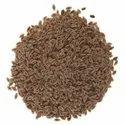 Isabgol/Plantago ovata/Spogel seed