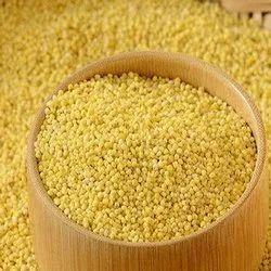 Foxtail Millet, High in Protein