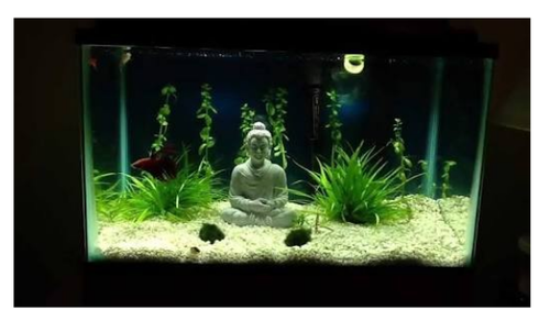 Aquariums - Buddha Statue Aquarium Wholesale Supplier from Noida