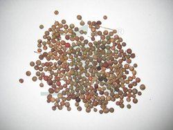 Brown Natural Organic EMBELIA RIBES