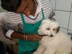 Pet Blood Transfusion Services