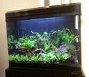 Boyu Glass Aquarium EA 60E