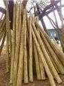 eucalyptus pole