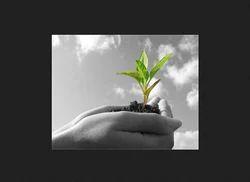 Agriculture Management Service