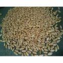 Natural Wheat Grain