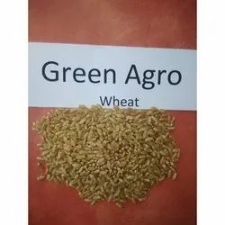 Golden Green Agro Wheat Grains, High in Protein