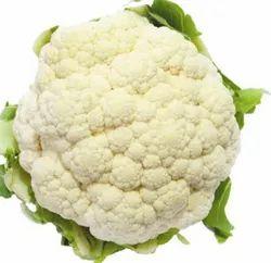 Pant Gobhi-2 White Cauliflower