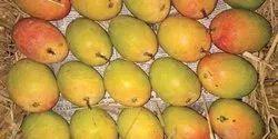 Yellow Natural Alphonso Mango, Carton
