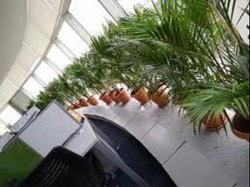 Plants On Rental Services
