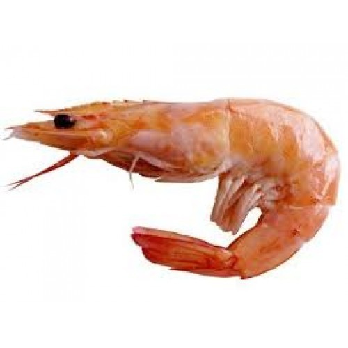 sea tiger shrimp for mess and household use rs 380 kilogram id