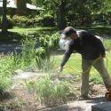 Garden Pest Control Service