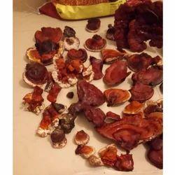 Rishi Mushroom Dry
