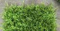 Artificial Vertical Gardening