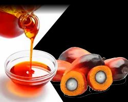 CP 10 Palm Olein Oil
