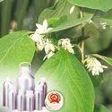 Styrax Benzoin Oil (Sumatra)