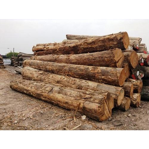 Teak Wood Burma Teak Wood Importer From Kolkata