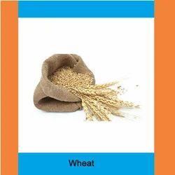 Golden Grains Wheat