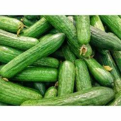 Green Cucumber Seeds