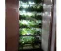 Hydroponic Environmental Control Indoor Vegetable Machine
