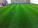 Artificial Grass Flooring Service