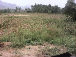 135 Acres Agriculture Land For Sale Rs:35,000,00/- ,Chemapalli,Vizianagaram, 20 Km From NH 16