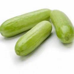Hybrid Cucumber Seeds Rijk Zwaan