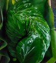Bangla PAN Betel Leaves