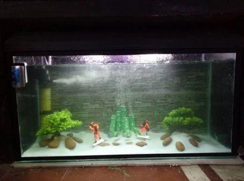 Aquatic Lucky Bamboo Aquariums Petslelo In Sector 63 Noida Id